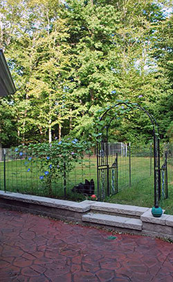 Back Patio - Click to Enlarge, close window when done