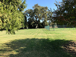 Residence Yard (East)   - Click to Enlarge, close window when done